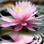 lotus380